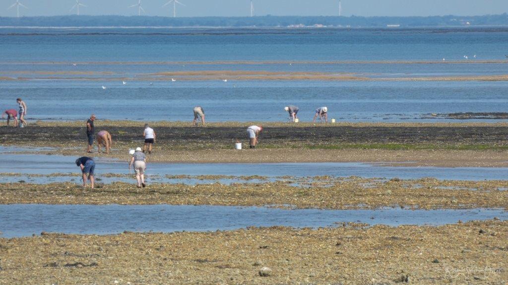 pêche à pied Vendée